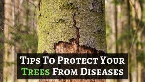 Tree Disease Protection